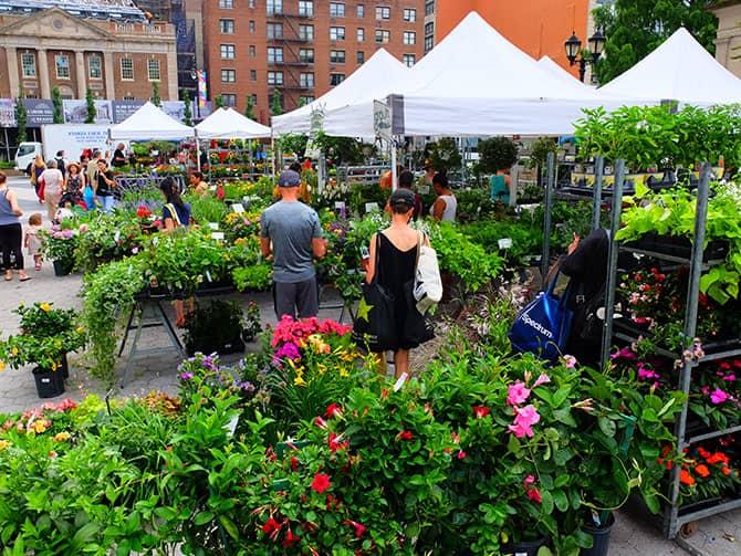 New York Markets - Plants on Union Square